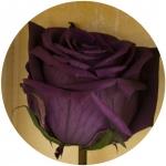 фото 1819  Долгосвежая роза Фиолетовый Аметист в подарочной упаковке (не вянут от 6 месяцев до 5 лет) цена, отзывы