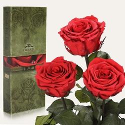 купить Три долгосвежих розы Алый Рубин 5 карат на коротком цена, отзывы