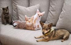 фото 3614  Подушка Кошка и собака цена, отзывы