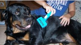 фото 2023  Расческа для собак и кошек Petzoom Self Cleaning цена, отзывы