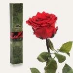 купить Долгосвежая роза Алый Рубин в подарочной упаковке (не вянут от 6 месяцев до 5 лет) на коротком стебле цена, отзывы