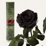 купить Долгосвежая роза Черный Бриллиант в подарочной упаковке (не вянут от 6 месяцев до 5 лет) цена, отзывы
