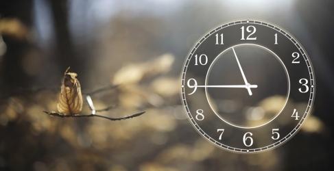 купить Часы на холсте Осень 25х50 цена, отзывы