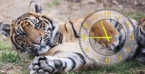 купить Часы на холсте Тигр 25х50 цена, отзывы