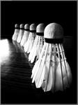 фото 985  Волан Белое перо в тубе (12шт) цена, отзывы