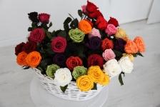 фото 1869  Три долгосвежих розы Алый Рубин 5 карат на коротком цена, отзывы