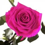 фото 1888  Три долгосвежих розы Малиновый Родолит в подарочной упаковке (не вянут от 6 месяцев до 5 лет) цена, отзывы