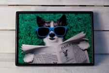 купить Поднос с подушкой Кот в очках  цена, отзывы