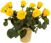 фото 1816  Долгосвежая роза Золотистый Хризоберилл в подарочной упаковке (не вянут  до 5 лет) цена, отзывы