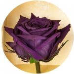 фото 3151  Три долгосвежих розы Фиолетовый аметист в подарочной упаковке (не вянут от 6 месяцев до 5 лет) цена, отзывы