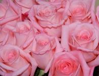фото 1891  Три долгосвежих розы Розовый Кварц в подарочной упаковке (не вянут от 6 месяцев до 5 лет) цена, отзывы