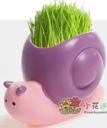 купить Травянчик с семенами Улитка цена, отзывы