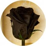фото 1812  Долгосвежая роза Черный Бриллиант в подарочной упаковке (не вянут от 6 месяцев до 5 лет) цена, отзывы