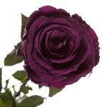 фото 1865  Долгосвежая роза Фиолетовый Аметист в подарочной упаковке (не вянут от 6 месяцев до 5 лет) цена, отзывы