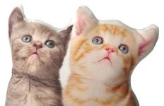 фото 3627  Подушка Кошки цена, отзывы