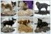 Фото3 Фурминатор для кошек и собак 4,5 см с кнопкой для сбрасывания шерсти