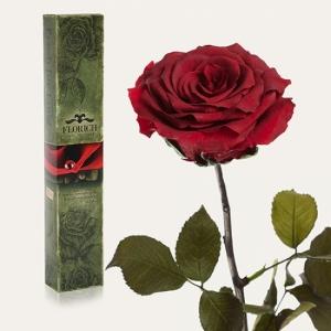 Фото Долгосвежая роза Багровый Гранат 5 карат на коротком