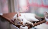 Оконная кроватка для кота