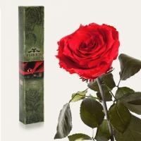 Долгосвежая роза Красный Рубин 7 карат (средний стебель)