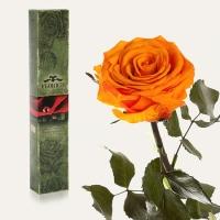 Долгосвежая роза Оранжевый Цитрин 5 карат на коротком стебле