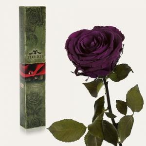 Долгосвежая роза Фиолетовый Аметист в подарочной упаковке 5 карат
