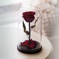 Роза в Колбе Багровый Гранат 5 карат