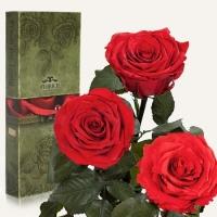 Фото Три долгосвежих розы Красный Рубин 7 карат (средний стебель)